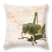03 Egyptian Locust Grasshopper Throw Pillow