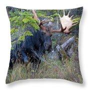 0339 Bull Moose 3 Throw Pillow