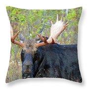 0341 Bull Moose Throw Pillow