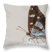 04 Southern White Admiral Butterfly Throw Pillow