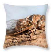 05 New Forest Cicada  Throw Pillow