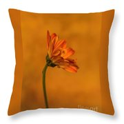 055 Throw Pillow