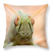 06 Egyptian Locust Grasshopper Throw Pillow
