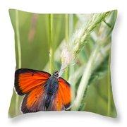07 Balkan Copper Butterfly Throw Pillow