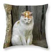 080801p076 Throw Pillow