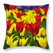 090416p028 Throw Pillow
