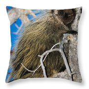 North American Porcupine Throw Pillow