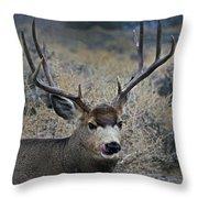 4x4 Mule Deer Buck   #7714 Throw Pillow