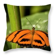 A Banded Orange Heliconian Butterfly Throw Pillow