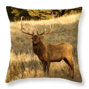 A Bull Elk In Rut Throw Pillow