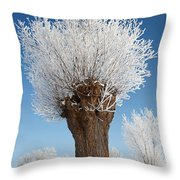 A Frosted Willow On A Very Cold And Bright Winter Day Throw Pillow