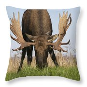 A Large Bull Moose Feeds Near Point Throw Pillow