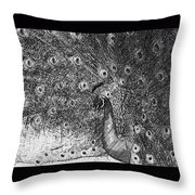 A Peacock's Feathers Throw Pillow