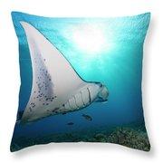 A Reef Manta Ray  Manta Alfredi Throw Pillow
