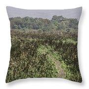 A Small Path Through Very Tall Grass Inside The Okhla Bird Sanctuary Throw Pillow