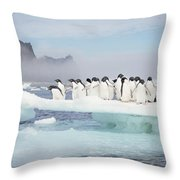 Adelie Penguins On Melting Ice Floe Throw Pillow