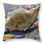 Adult Male Blue Crab Throw Pillow