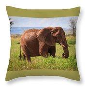 African Desert Elephant Throw Pillow