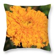 African Marigold Named Crackerjack Gold Throw Pillow