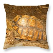 African Spur Thigh Tortoise Throw Pillow