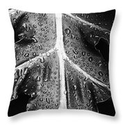 After The Rain - Bw Throw Pillow