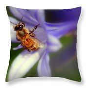 Agapanthus Africanus Throw Pillow