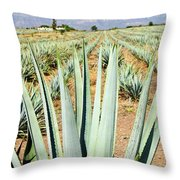 Agave Cactus Field In Mexico Throw Pillow by Elena Elisseeva
