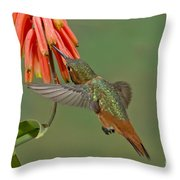 Allens Hummingbird Feeding Throw Pillow