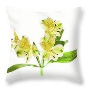 Alstroemeria Flowers Against White Throw Pillow
