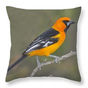 Altamira Oriole Throw Pillow