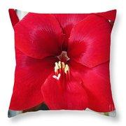 Amaryllis Named Black Pearl Throw Pillow