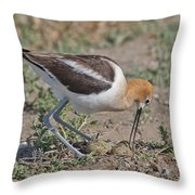 American Avocet And Eggs Throw Pillow