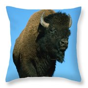 American Bison Bull Throw Pillow