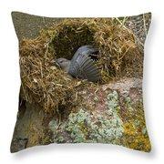 American Dipper In Nest   #1468 Throw Pillow