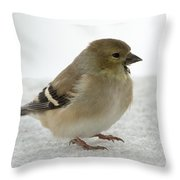 American Goldfinch In The Snow Throw Pillow