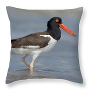 American Oystercatcher Feeding On Clam Throw Pillow