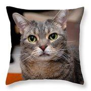 American Shorthair Cat Portrait Throw Pillow
