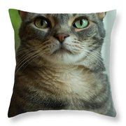 American Shorthair Cat Profile Throw Pillow