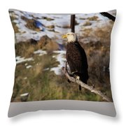 An Eagle Perched   Throw Pillow
