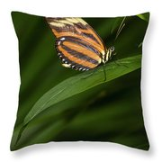 An Isabella Butterfly Eueides Isabella Throw Pillow