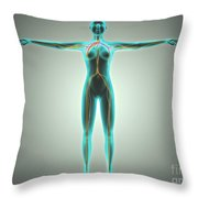 Anatomy Of Female Body With Arteries Throw Pillow by Stocktrek Images