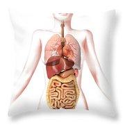 Anatomy Of Female Body With Internal Throw Pillow by Leonello Calvetti