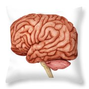 Anatomy Of Human Brain, Side View Throw Pillow