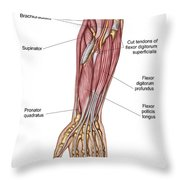 Anatomy Of Human Forearm Muscles, Deep Throw Pillow