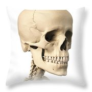 Anatomy Of Human Skull, Side View Throw Pillow