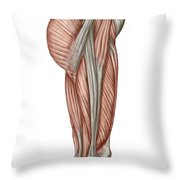Anatomy Of Human Thigh Muscles Throw Pillow