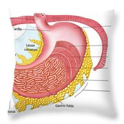 Anatomy Of The Human Stomach Throw Pillow