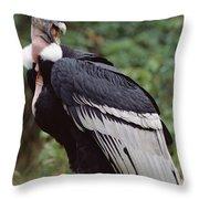Andean Condor Male Cayambe Ecuador Throw Pillow