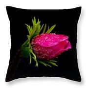 Anemone Flower On Black Throw Pillow