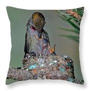 Annas Hummingbird Feeding Young Throw Pillow